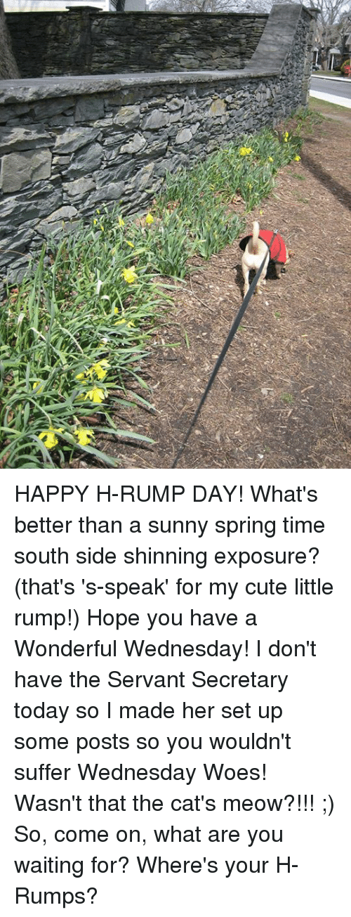 Cats, Cute, and Memes: HAPPY H-RUMP DAY!  What's  better than a sunny spring time south side shinning exposure?  (that's 's-speak' for my cute little rump!)  Hope you have a Wonderful Wednesday!  I don't have the Servant Secretary today so I made her set up some posts so you wouldn't suffer Wednesday Woes!  Wasn't that the cat's meow?!!! ;)  So, come on, what are you waiting for?  Where's your H-Rumps?