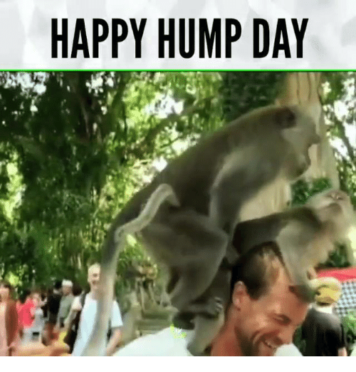 Dank, Hump Day, and Happy: HAPPY HUMP DAY
