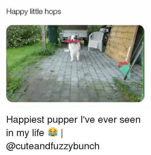 Life, Memes, and Happy: Happy little hops Happiest pupper I've ever seen in my life 😂 | @cuteandfuzzybunch