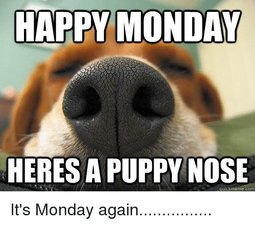 Happy monday heresa puppy nose quick meme com its monday again memes puppies and puppy happy monday heresa puppy nose quick meme com its thecheapjerseys Gallery