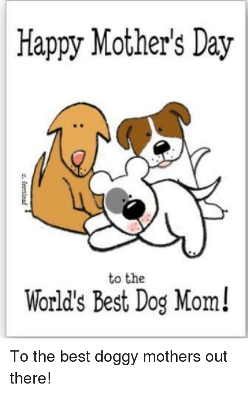 Memes, Mother's Day, and Best: Happy Mother's Day  to the  World's Best Dog Mom! To the best doggy mothers out there!