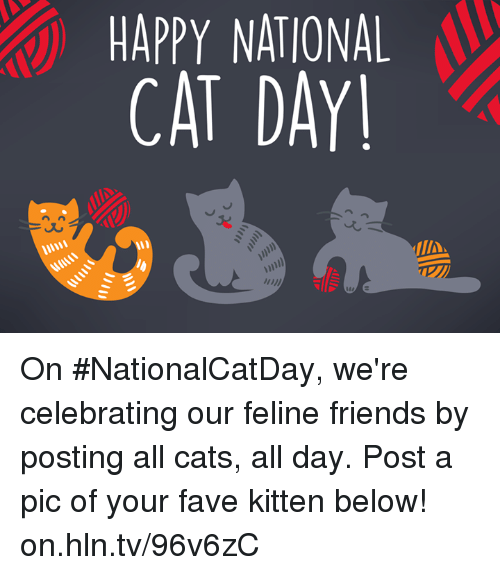 Happy National Cat Day On Nationalcatday We Re Celebrating Our Feline Friends By Posting All Cats All Day Post A Pic Of Your Fave Kitten Below Onhlntv96v6zc Cats Meme On Me Me