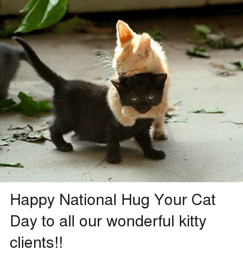 happy national hug your cat day to all our wonderful 6350621 ✅ 25 best memes about hug your cat day hug your cat day memes