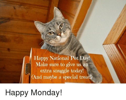 Memes, Happy, and Today: Happy National Pet Day!  Make sure to give us an  extra snuggle today!  (And maybe a special treat Happy Monday!