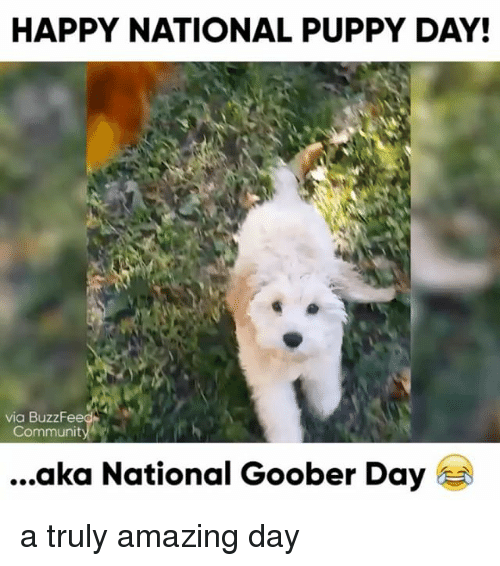 Relatable, Aka, and Goobers: HAPPY NATIONAL PUPPY DAY!  via BuzzFeed  Communit  aka National Goober Day a truly amazing day