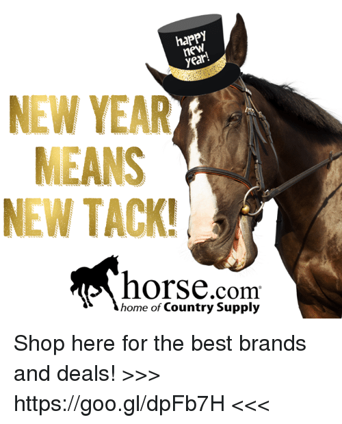 horses memes and horse happy new year means new tack horse