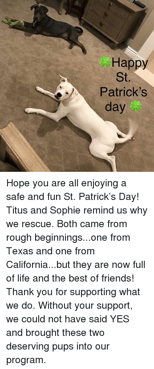 Friends, Life, and Memes: Happy  St.  Patrick's  day Hope you are all enjoying a safe and fun St. Patrick's Day! Titus and Sophie remind us why we rescue. Both came from rough beginnings...one from Texas and one from California...but they are now full of life and the best of friends! Thank you for supporting what we do. Without your support, we could not have said YES and brought these two deserving pups into our program.