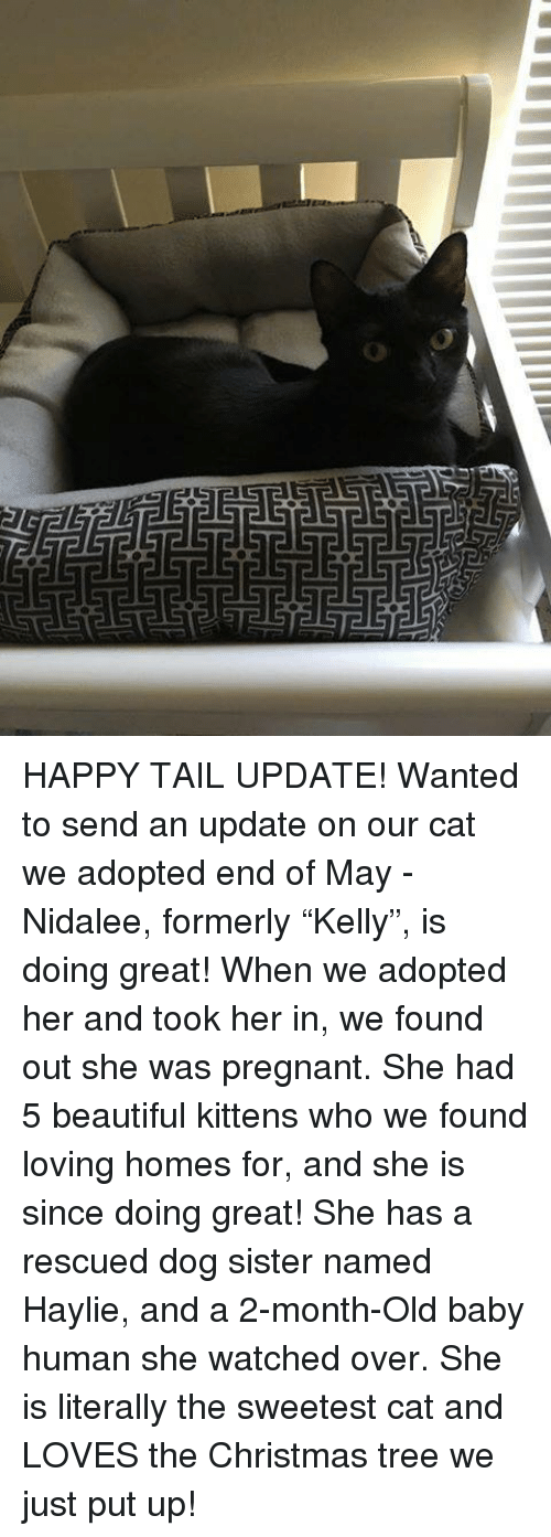 """Beautiful, Christmas, and Memes: HAPPY TAIL UPDATE! Wanted to send an update on our cat we adopted end of May - Nidalee, formerly """"Kelly"""", is doing great! When we adopted her and took her in, we found out she was pregnant. She had 5 beautiful kittens who we found loving homes for, and she is since doing great! She has a rescued dog sister named Haylie, and a 2-month-Old baby human she watched over. She is literally the sweetest cat and LOVES the Christmas tree we just put up!"""