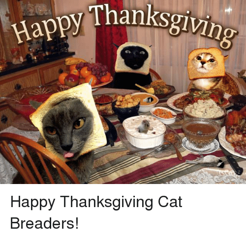 Image result for cat memes thanksgiving