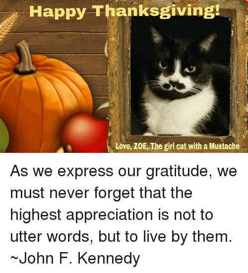 Happy Thanksgiving Love ZoE the Girl Cat With a Mustache as