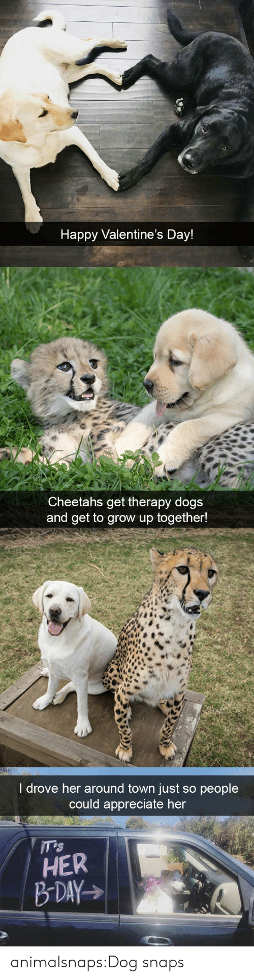 Dogs, Target, and Tumblr: Happy Valentine's Day!   Cheetahs get therapy dogs  and get to grow up together!   I drove her around town just so people  could appreciate her  HER animalsnaps:Dog snaps