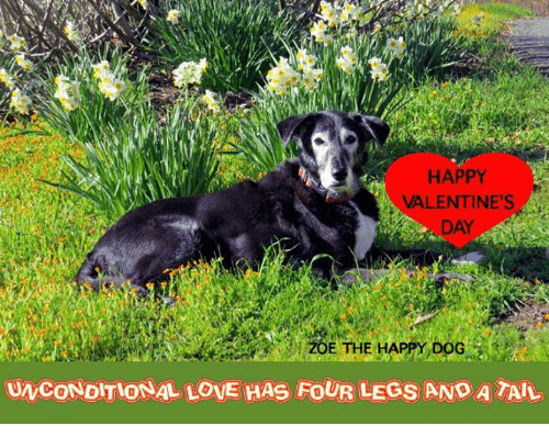 Love, Memes, and Valentine's Day: HAPPY  VALENTINE'S  DAY  UNCONDITIONAL LOVE HAS FOUR LEGS ANO A TAL