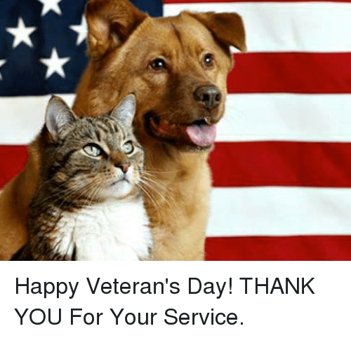 Image result for dog and cat veteran day