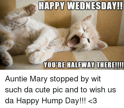 Cute, Hump Day, And Memes: HAPPY WEDNESDAY!! HAPPY YOUTRE HALFWAY THERE