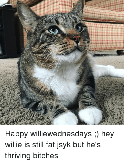 Memes, Happy, and Fat: Happy williewednesdays ;) hey willie is still fat jsyk but he's thriving bitches