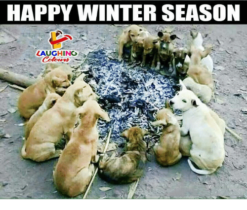 Winter, Happy, and Indianpeoplefacebook: HAPPY WINTER SEASON  LAUGHING  Colors