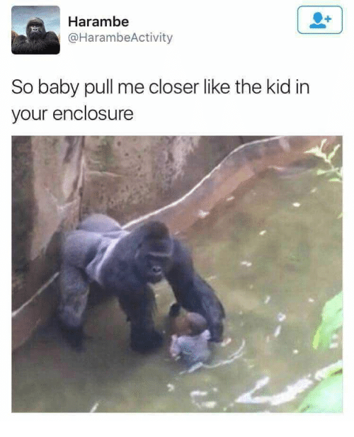 harambe so baby pull me closer like the kid in your enclosure baby