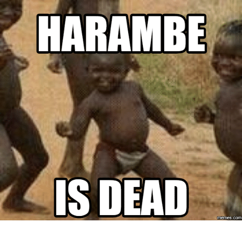 harambe is dead memes com 18067309 ✅ 25 best memes about is dead is dead memes,Dead Monkey Meme