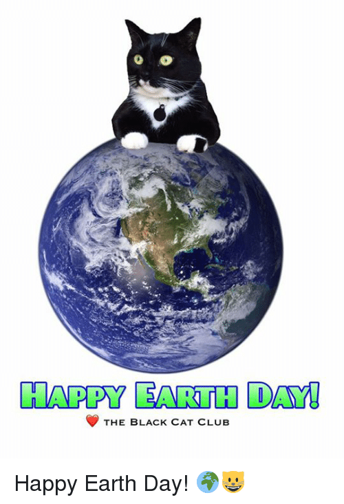 Image result for happy earth day cat