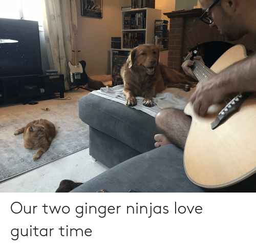 Harrison Ford, Love, and Ford: HARRISON FORD Our two ginger ninjas love guitar time