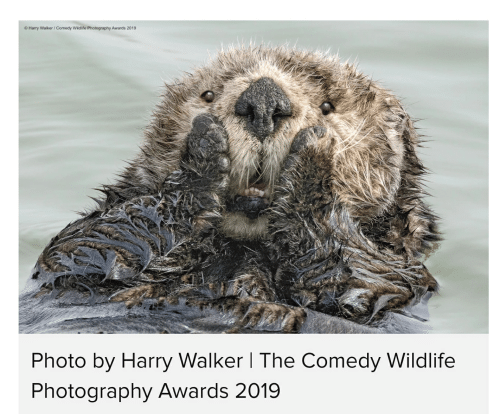 Harry Walker Comedy Wildlife Photography Awards 2019 Photo By Harry Walker I The Comedy Wildlife Photography Awards 2019 Photography Meme On Me Me