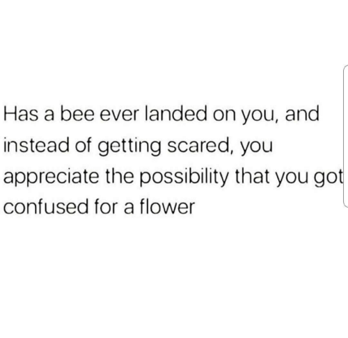 Confused, Appreciate, and Flower: Has a bee ever landed on you, and  instead of getting scared, you  appreciate the possibility that you got  confused for a flower