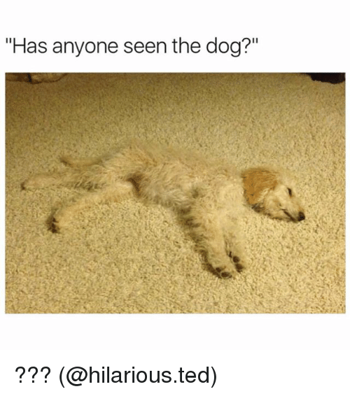 """Dogs, Memes, and Ted: """"Has anyone seen the dog?"""" ??? (@hilarious.ted)"""