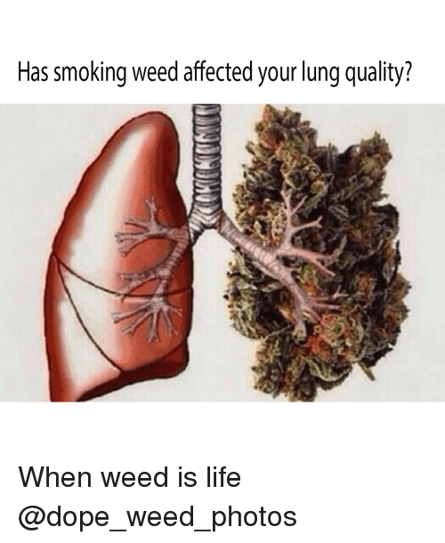Dope, Life, and Smoking: Has smoking weed affected your lung quality? When weed is life @dope_weed_photos