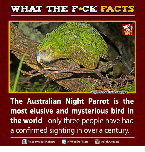 Dank, Mystery, and Australian: HAT THE FCK FACTS  WHAT  FACTS  magesource Australian Geographic  The Australian Night Parrot is the  most elusive and mysterious bird in  the world only three people have had  a confirmed sighting in over a century.  ediplywtfacts  Ed WhatTheFFacts  FB.com/WhatThe Facts