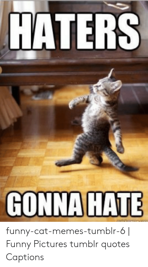 HATERS Funny-Cat-Memes-Tumblr-6 | Funny Pictures Tumblr ...