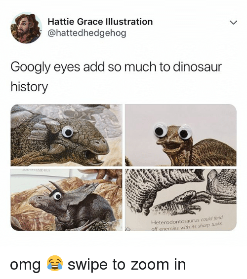 Dinosaur, Omg, and Zoom: Hattie Grace Illustration  @hattedhedgehog  Googly eyes add so much to dinosaur  history  Heterodontosaurus could fend  off enemies with its sharp tusks omg 😂 swipe to zoom in