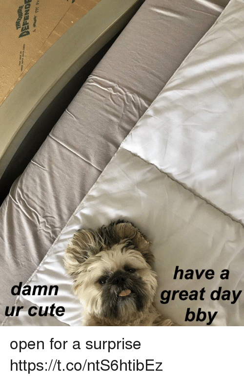 Cute, Girl Memes, and Open: have a  damn  ur cute  great day  bby open for a surprise https://t.co/ntS6htibEz