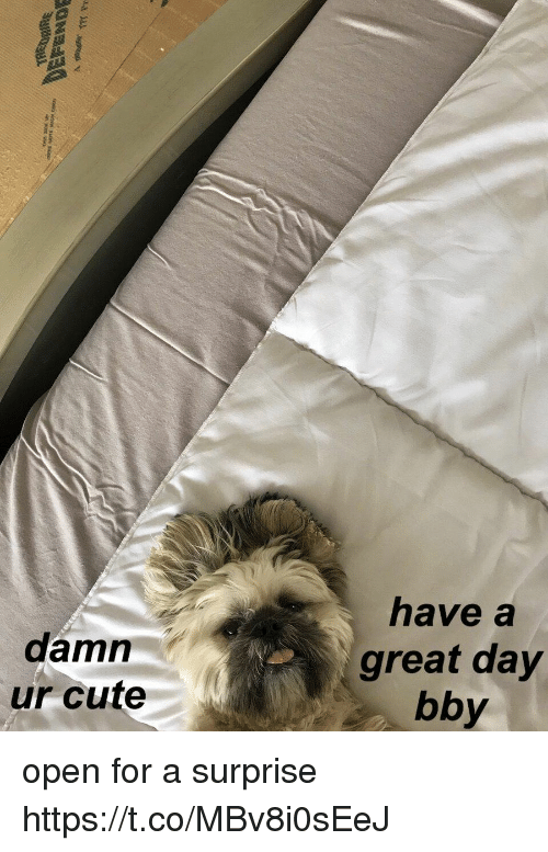 Cute, Girl Memes, and Open: have a  damn  ur cute  great day  bby open for a surprise https://t.co/MBv8i0sEeJ
