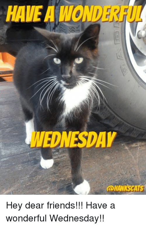Friends, Memes, and Wednesday: HAVE A WOND  WEDNESDAY  HAWNSCATS Hey dear friends!!!  Have a wonderful Wednesday!!