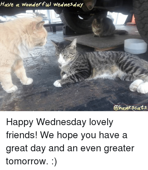 Memes, 🤖, and Have a Great Day: Have a wonderful Wednesday  @hankscats Happy Wednesday lovely friends!  We hope you have a great day and an even greater tomorrow.  :)
