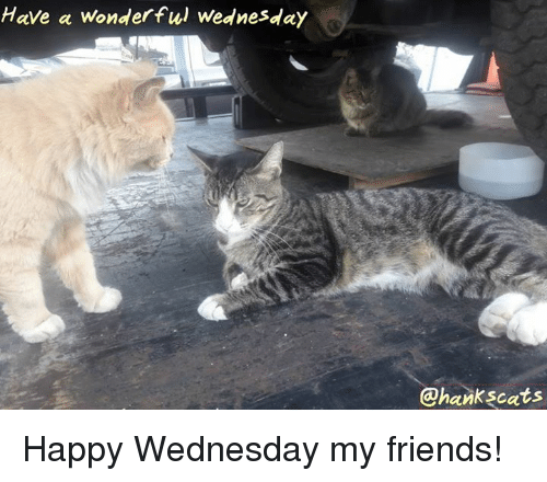 Friends, Memes, and Happy: Have a wonderful Wednesday  @hankscats Happy Wednesday my friends!