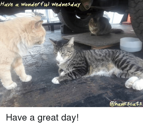 Memes, Wednesday, and 🤖: Have a wonderful Wednesday  @hankscats Have a great day!
