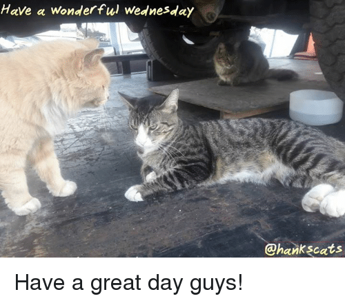 Memes, Wednesday, and 🤖: Have a wonderful Wednesday  @hankscats Have a great day guys!