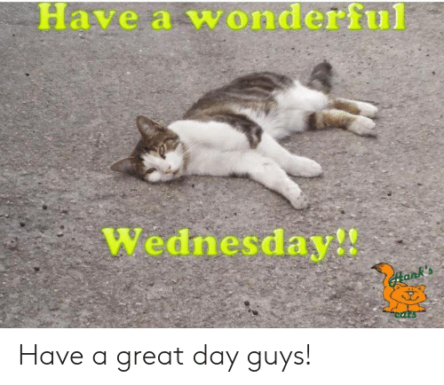 Memes, Wednesday, and 🤖: Have a wonderful  Wednesday!! Have a great day guys!