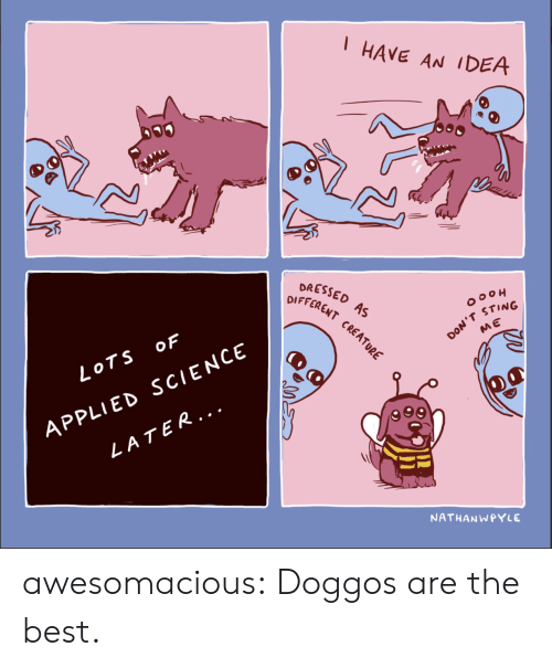 Tumblr, Best, and Blog: HAVE AN IDEA  DRESSED  DIFFERENT  A  CRE  OOOH  STING  ME  LOTS oF  APPLIED SCIENCE  LATER...  NATHANWPYLE awesomacious:  Doggos are the best.