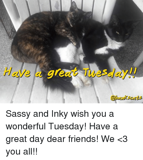 Have Gre S Sassy And Inky Wish You A Wonderful Tuesday Have A Great