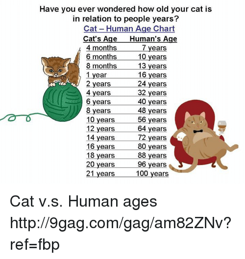 have you ever wondered how old your cat is in relation to people years cat human age chart cat. Black Bedroom Furniture Sets. Home Design Ideas