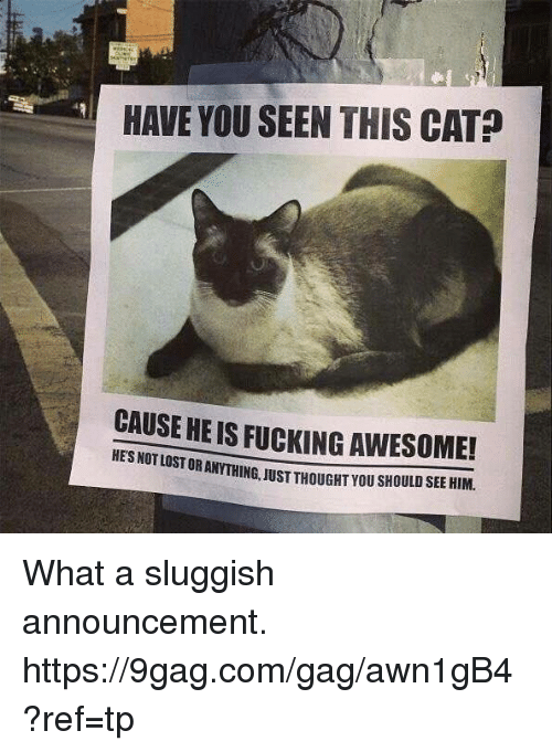 9gag, Dank, and Awesome: HAVE YOU SEEN THIS CAT?  CAUSE HEIS FUCKING AWESOME!  STORANTHING, JUST THOUGHT you sHOULD SEE HIM. What a sluggish announcement. https://9gag.com/gag/awn1gB4?ref=tp
