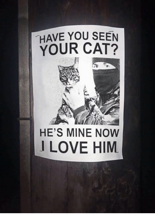 how to tell your cat you love him