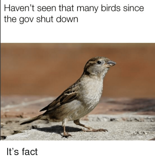 Birds, Down, and Shut Down: Haven't seen that many birds since  the gov shut down