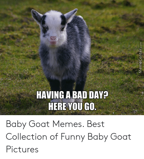 17 Best Funny Baby Goat Quotes Memes And Puns Images Goat Quote