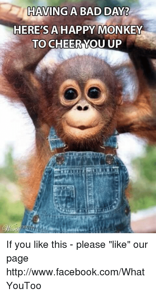 Having A Bad Day Heres A Happy Monkey To Cheer You Up If You Like