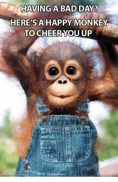 Having A Bad Day Heres A Happy Monkey To Cheer You Up Bad Meme