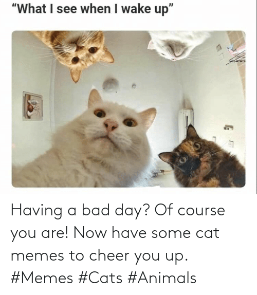 Animals, Bad, and Bad Day: Having a bad day? Of course you are! Now have some cat memes to cheer you up. #Memes #Cats #Animals