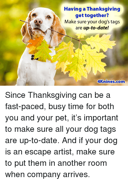 having a thanksgiving get together make sure your dog s tags are up